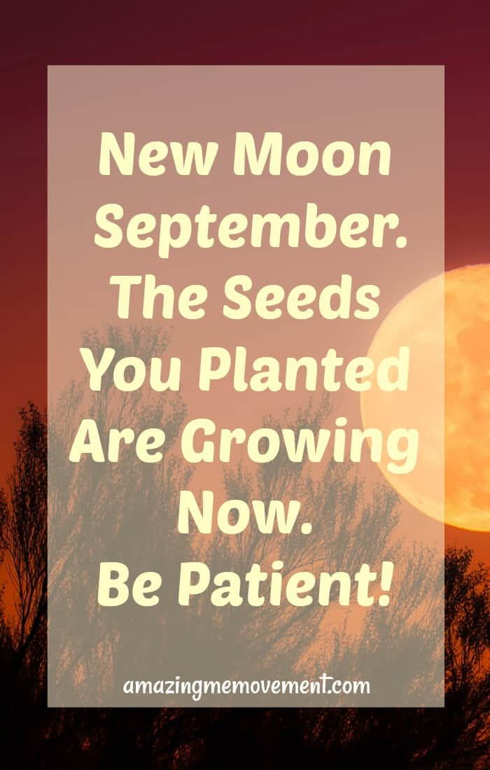 You know all those seeds you've been planting all year? It's time. Fall harvest. You've been patient and now you will reap your rewards. Learn more about the Virgo new moon here. #newmoonenergies #reapwhatyousow #harvesttime #plantingseeds #patience #helpingothers #beofservice #manifesting #abundance #intenseenergy #havefaith #goodthingsarecoming #inspirationalblogstofollow
