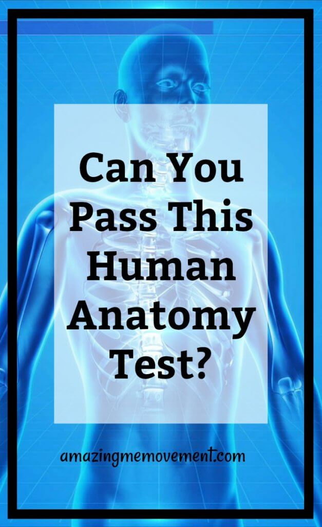 can you pass this human anatomy test