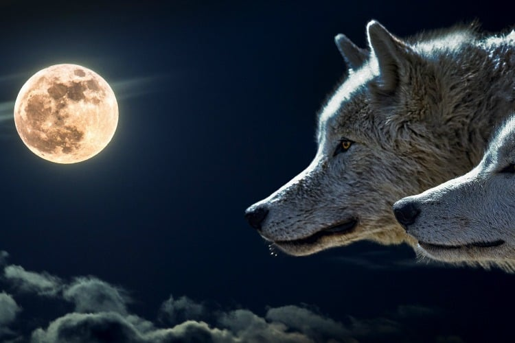 the super full wolf moon in january, the meaning of the wolf moon