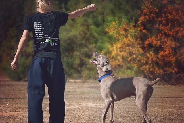 lady playing with dog-living a healthy lifestyle
