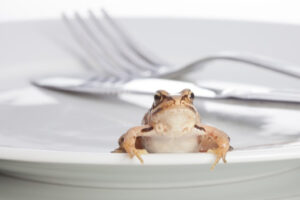 Eat the frog, when to do it and why you must do it
